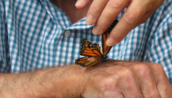 Monarch Butterfly Finds Friends in McCormick Home Residents
